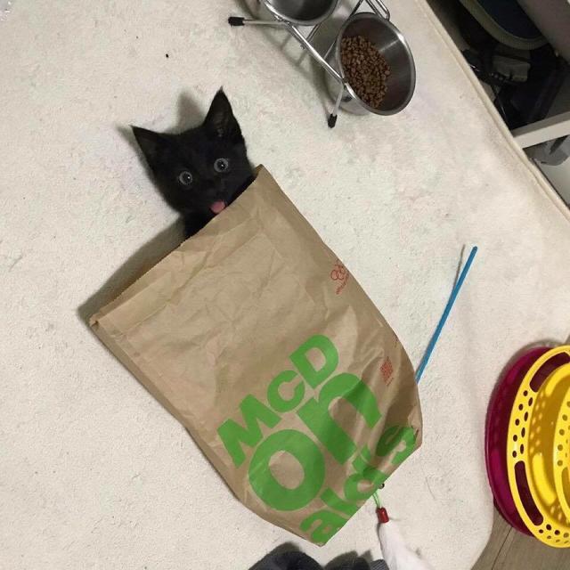 키르시 가방 (유광) - 상품이미지